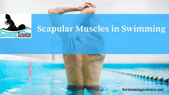 Scapular Muscles in Swimming