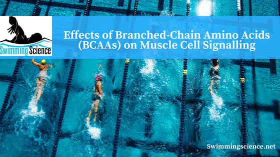 Effects of Branched-Chain Amino Acids (BCAAs) on Muscle Cell Signalling