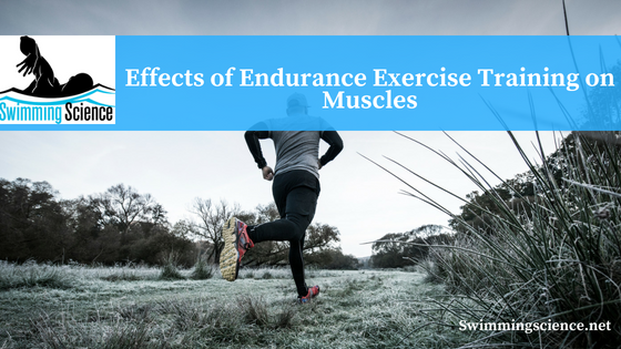 Effects of Endurance Exercise Training on Muscles