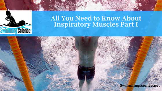All You Need to Know About Inspiratory Muscles Part I