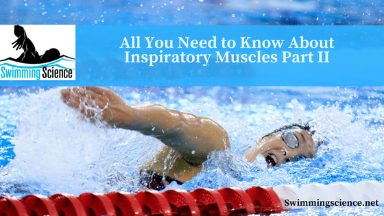 All You Need to Know About Inspiratory Muscles Part II