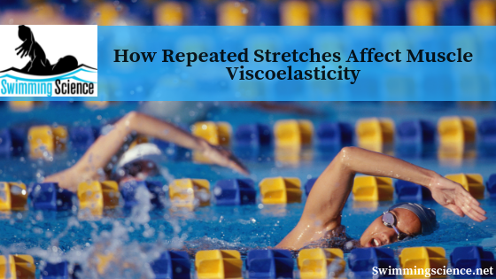 How Repeated Stretches Affect Muscle Viscoelasticity